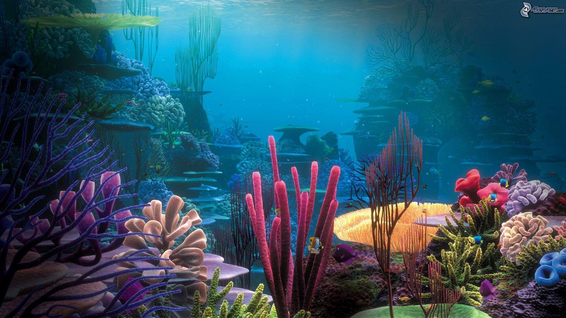 Fondo del mar - Fotos fondo del mar ...