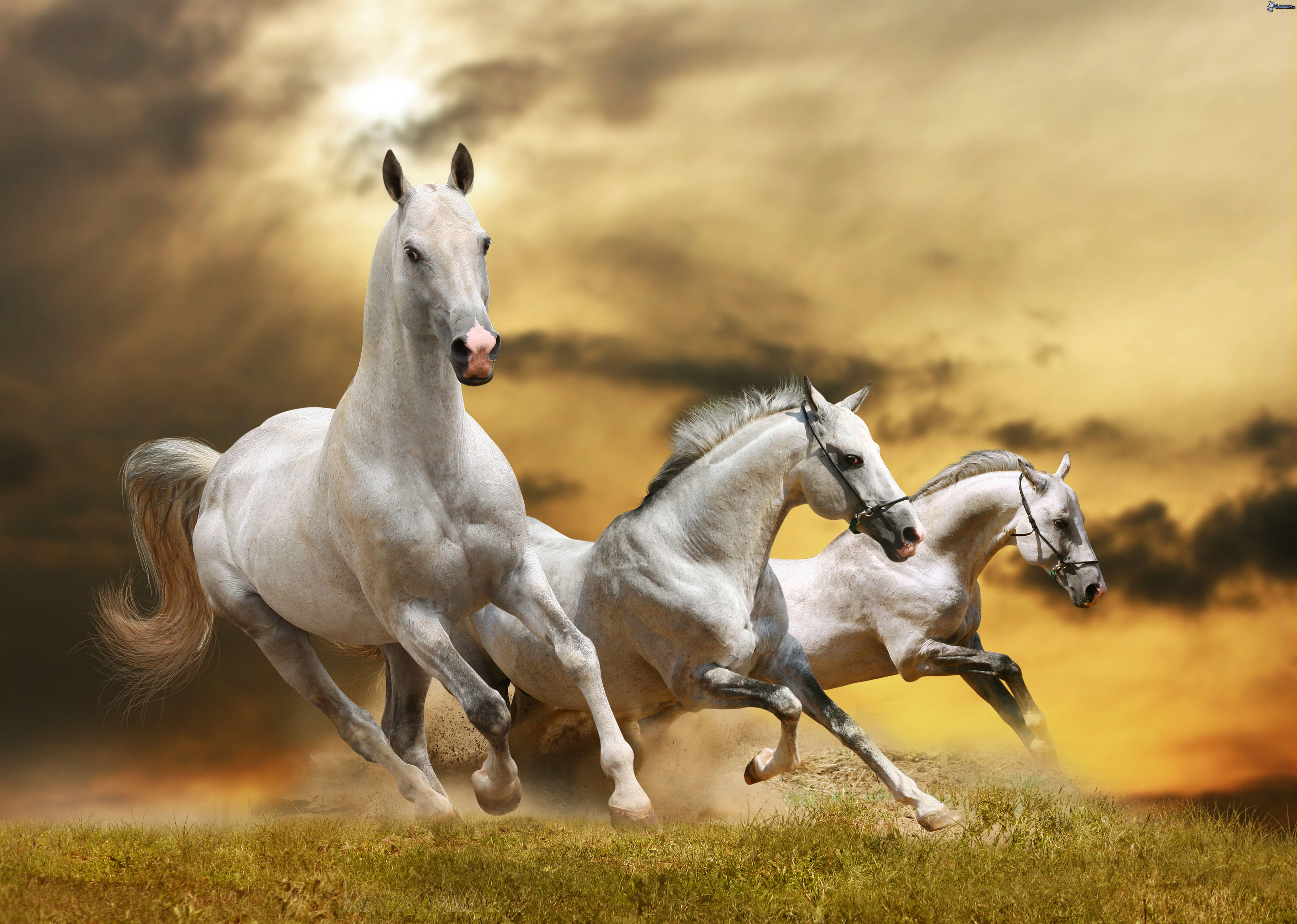 [Imagen: caballos-blancos-200047.jpg]