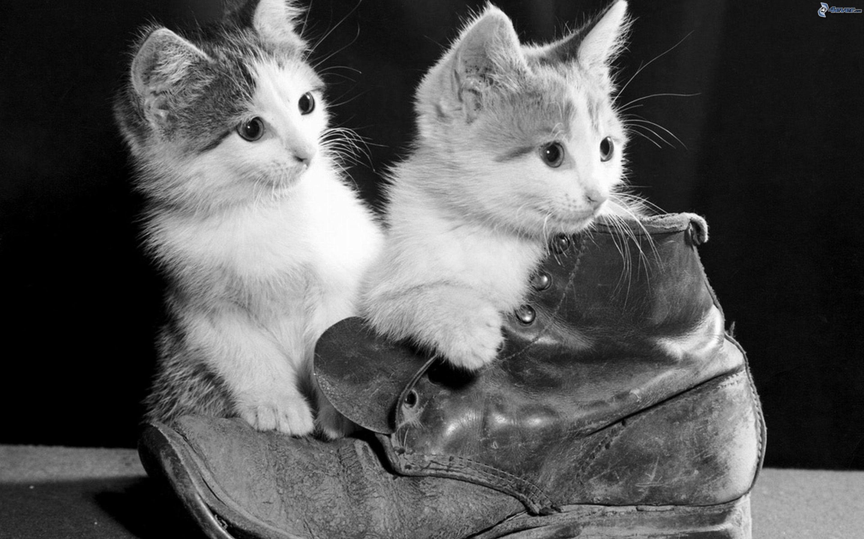Hermosas imagenes en blanco y negro page 6 notiforo for Imagenes bonitas en blanco y negro