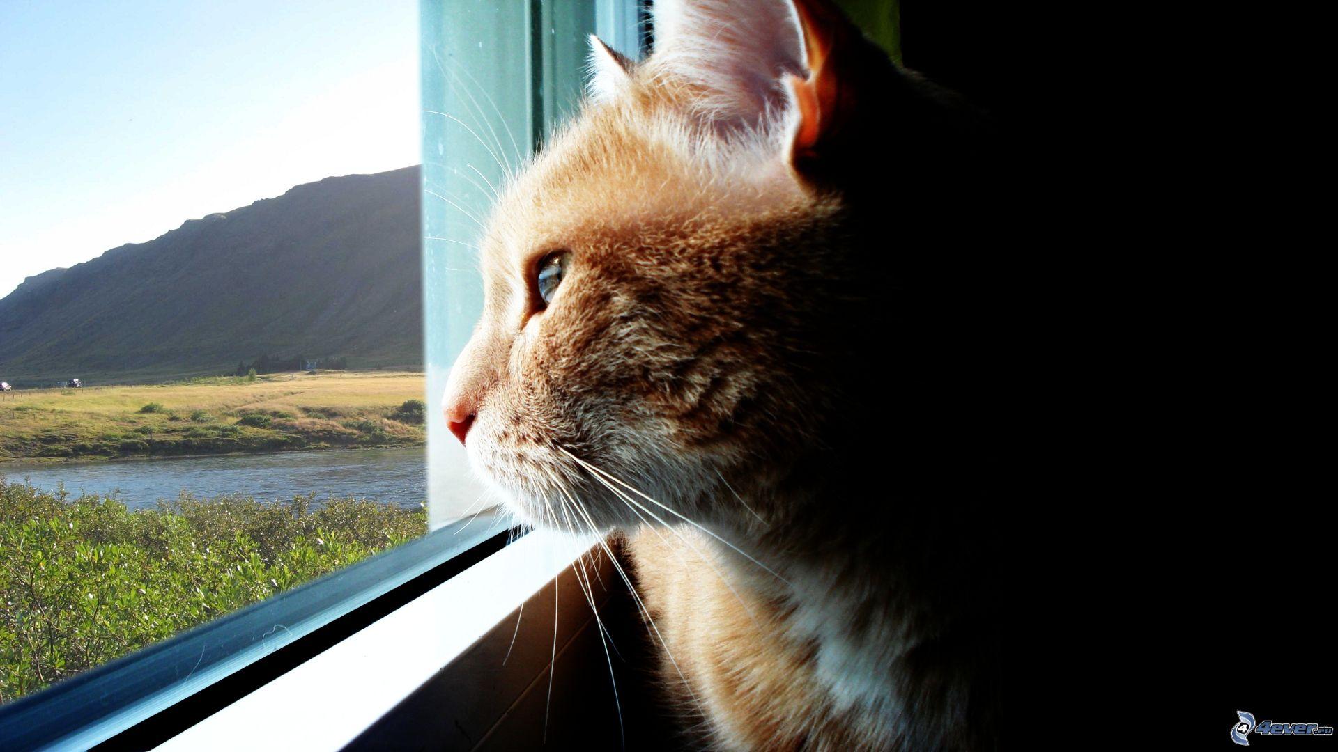 Gato En Una Ventana
