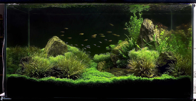 Acuario - Iluminacion para plantas ...