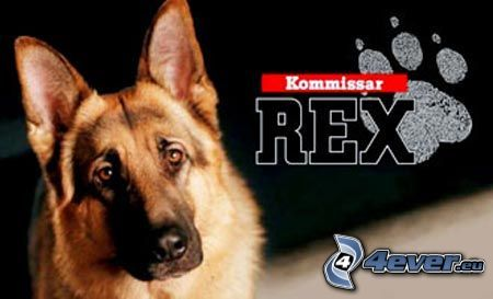 kommissar rex download