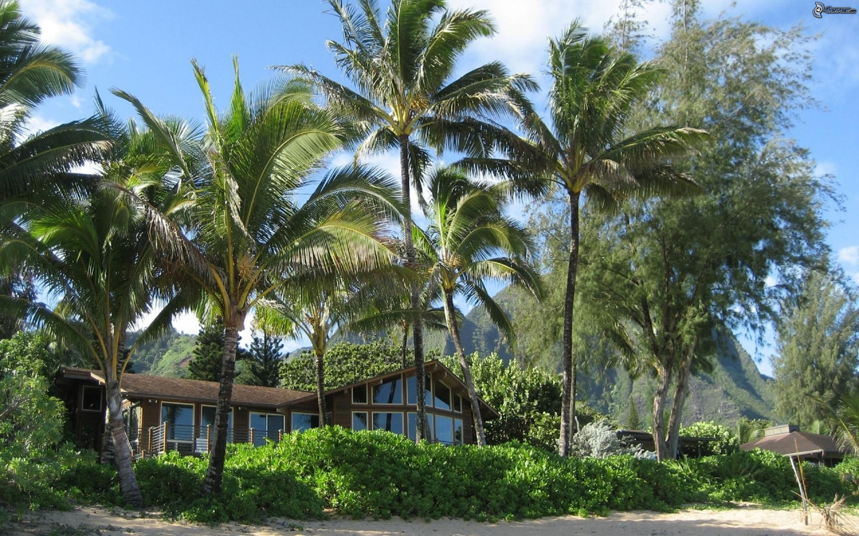 Casa de lujo - La casa de las palmeras ...