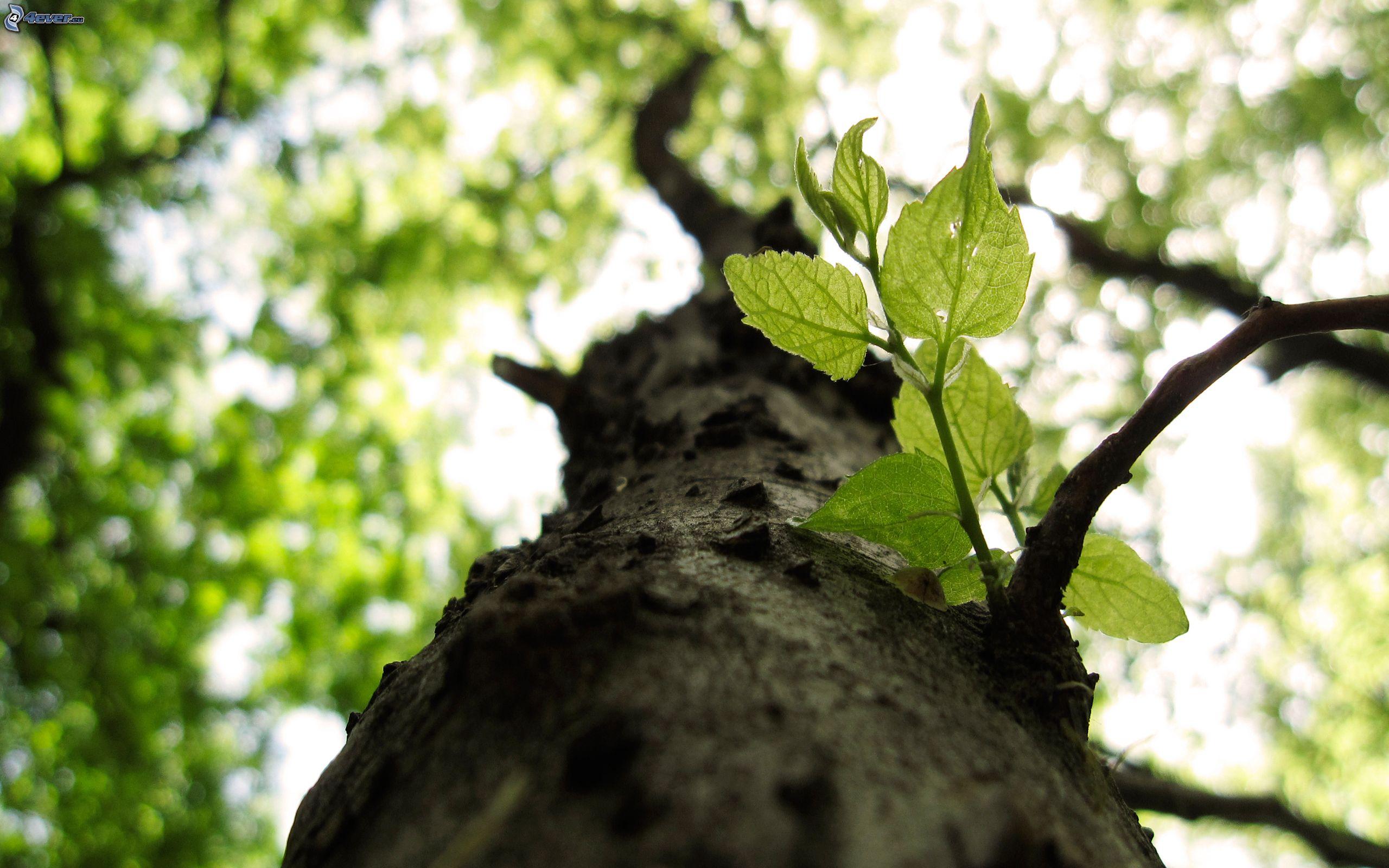 Imagen de arbol con hojas imagui for Arboles de hoja caduca
