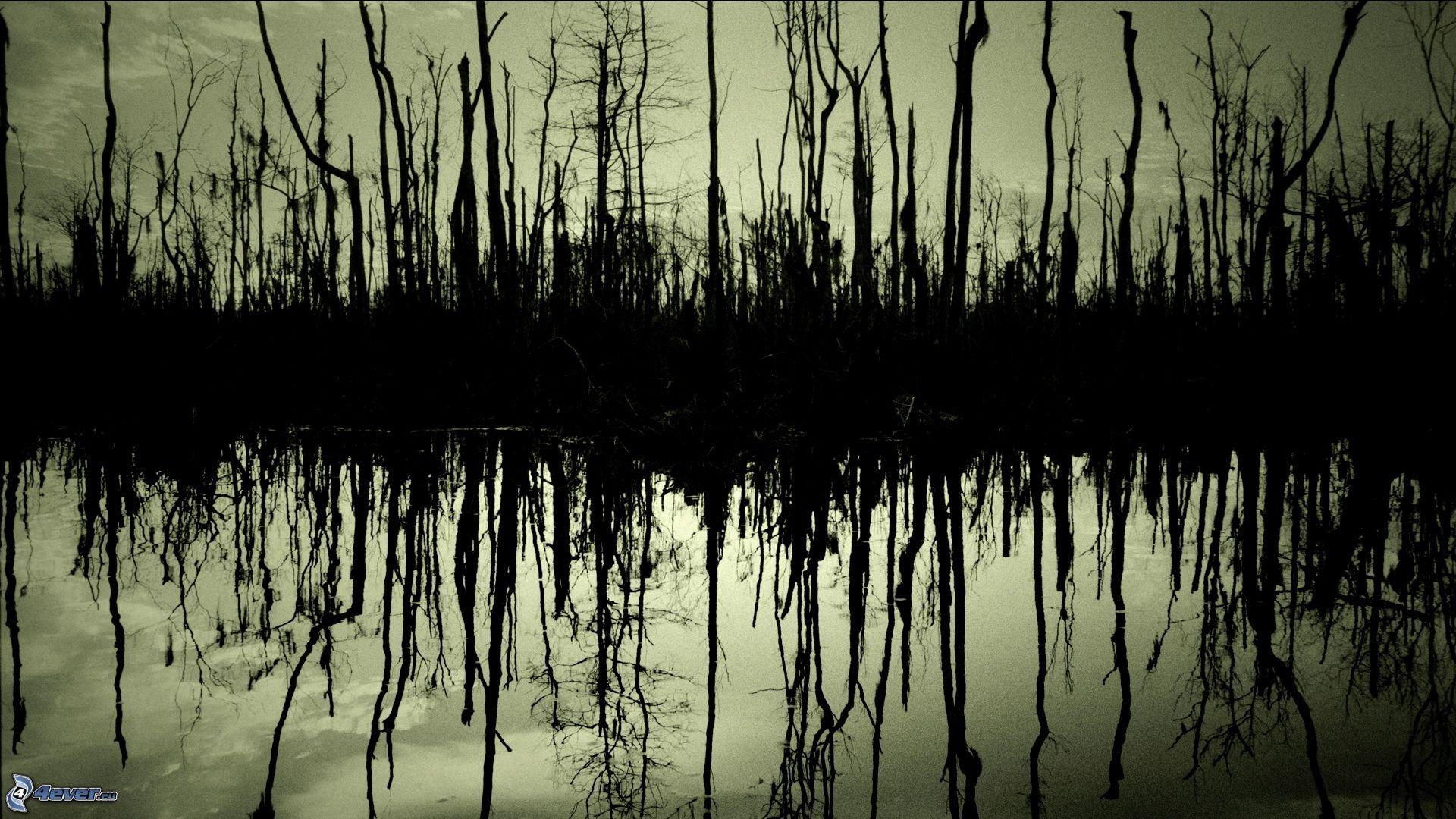 árboles Secos Animados el Bosque árboles Secos