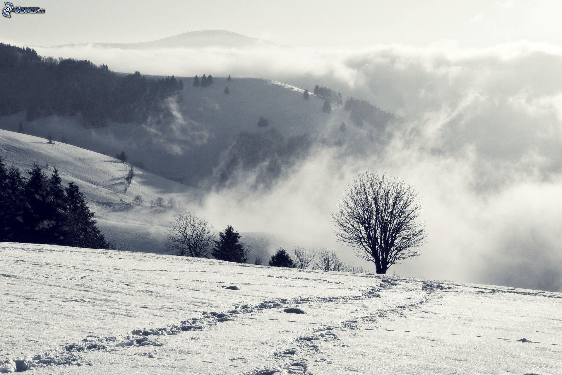 Colina for Blanco nieve
