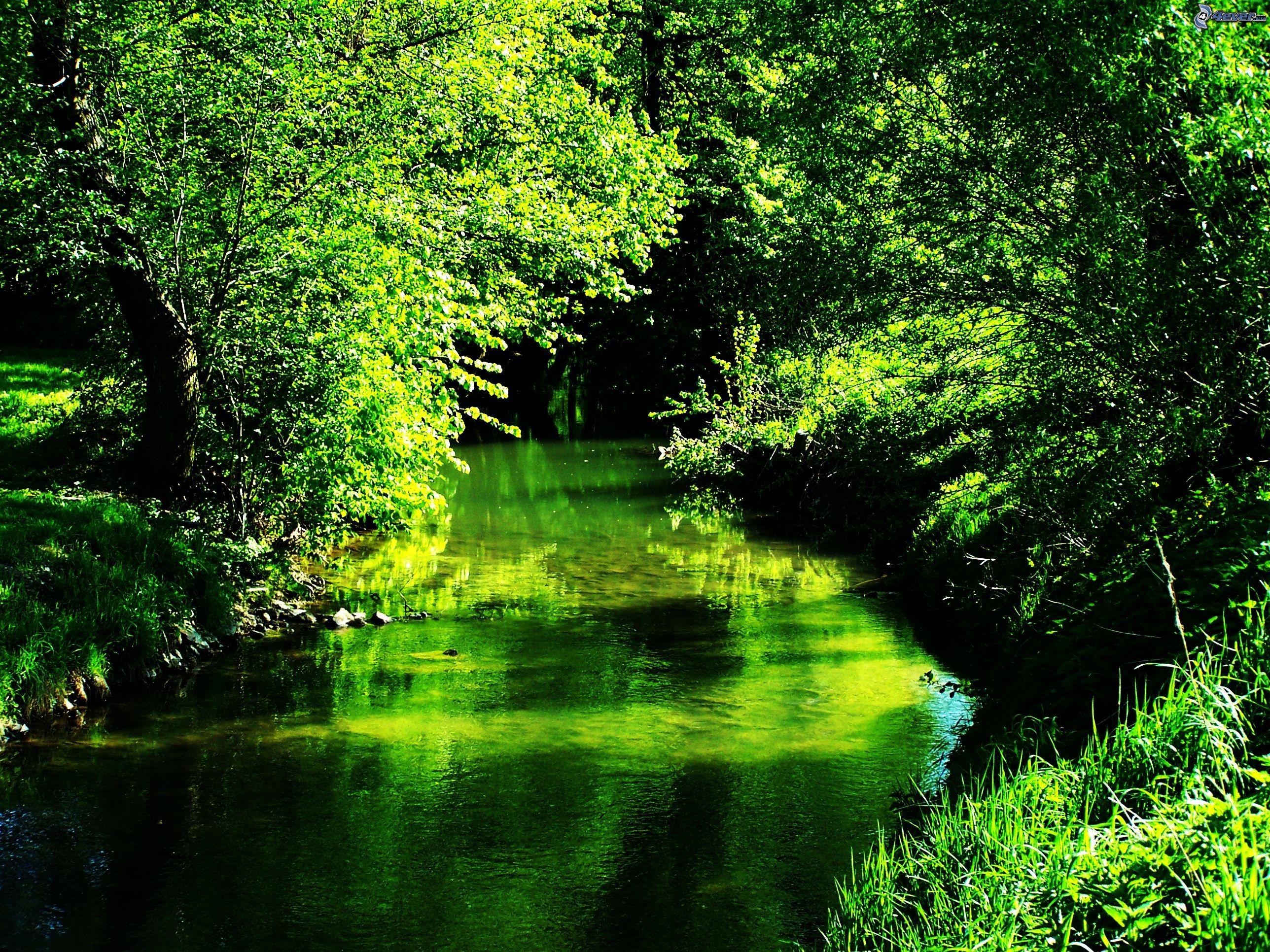 Naturaleza verde for Immagini natura hd