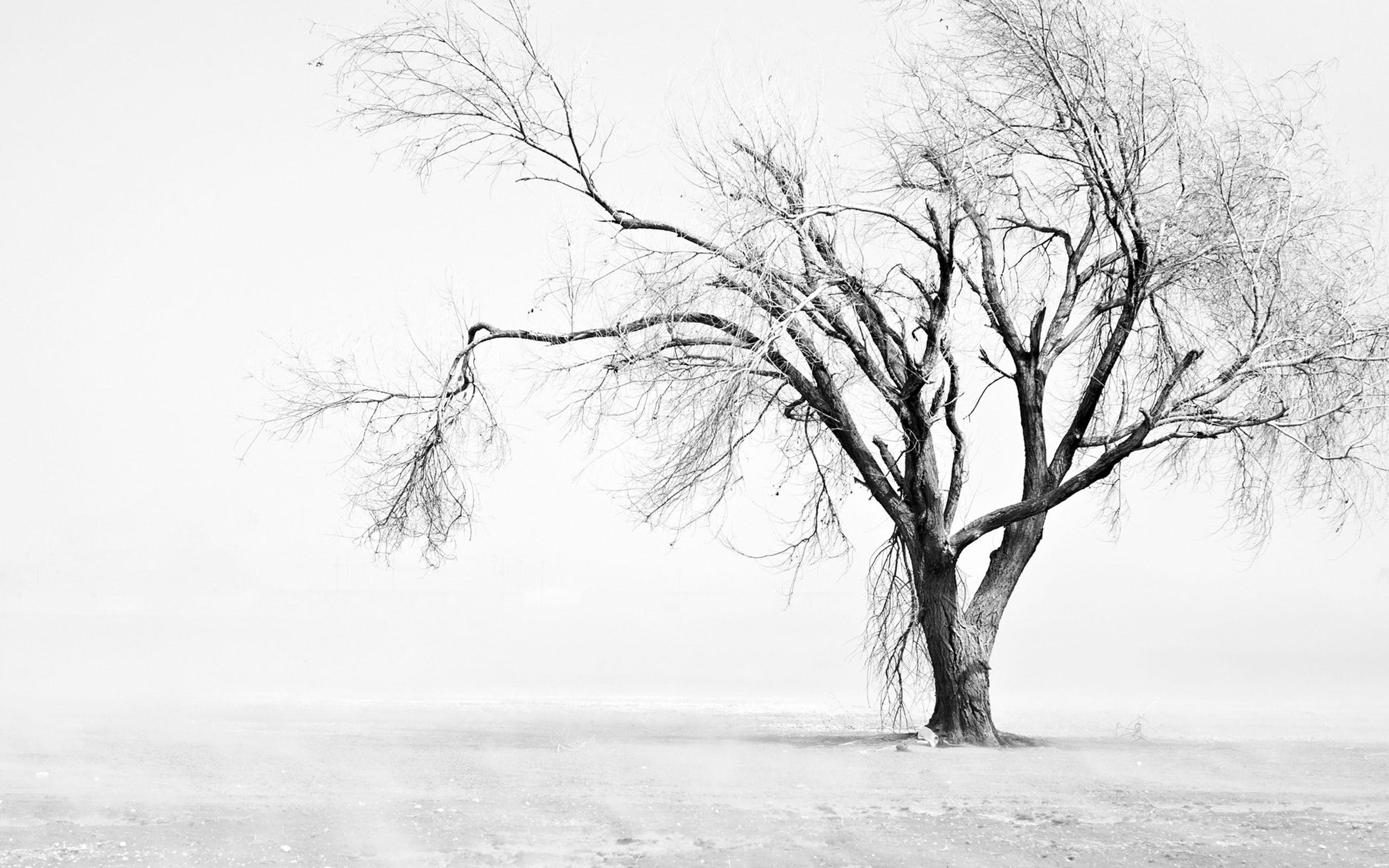 041c647a962 ... Vector Pintado Hermoso árbol Nevado Vector Pintado A Mano Snow Árbol de Navidad  verde nevado de 180cm YUKON Ref. 17701152 Leroy arbol nevado Coca Cuadro ...