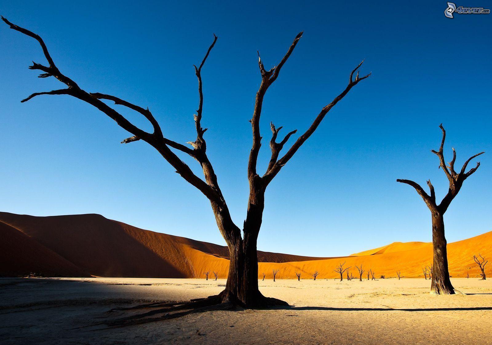 Arboles Secos árboles Secos Desierto
