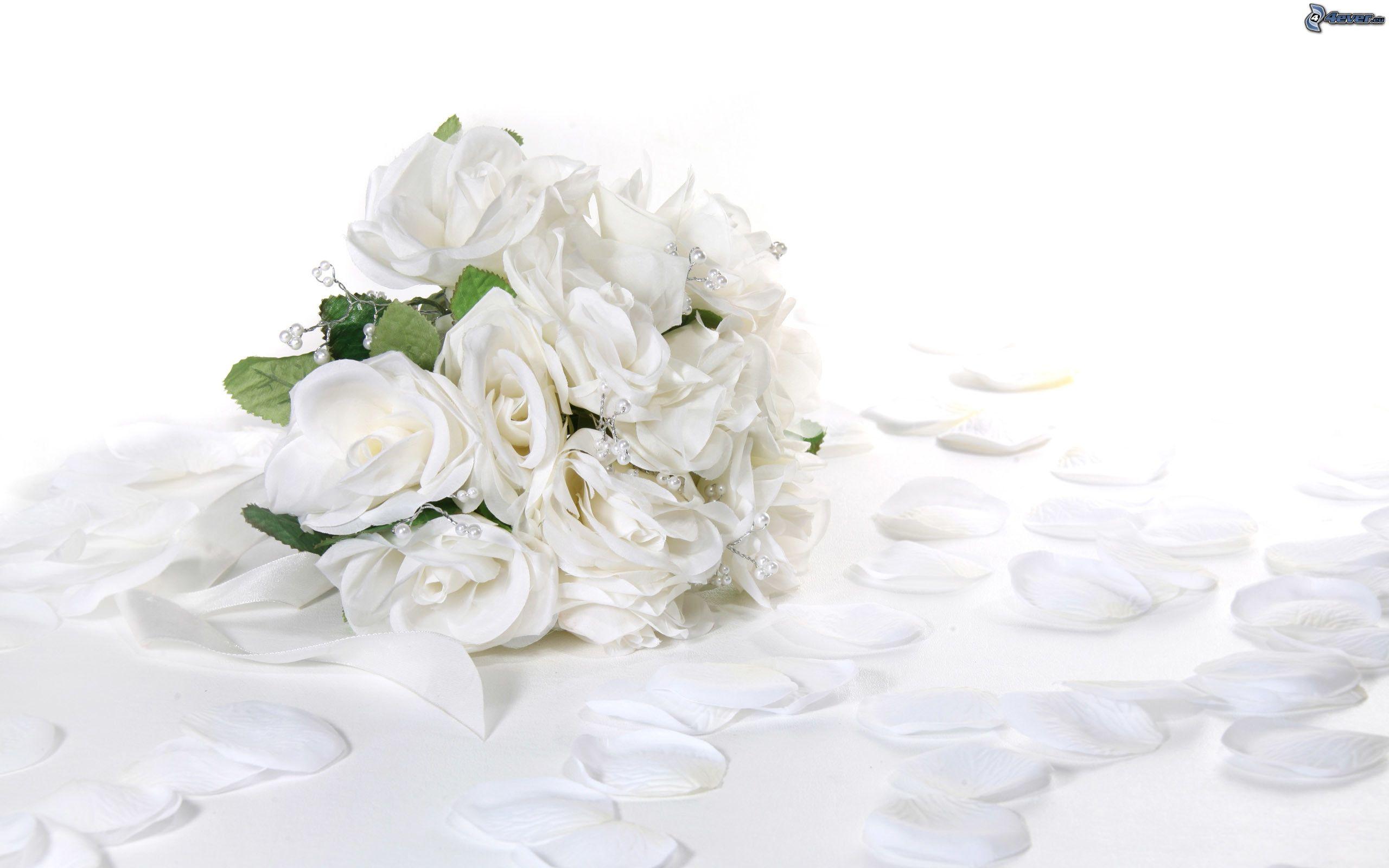 Rosas Blancas Wallpapers 66926 Interiordesign