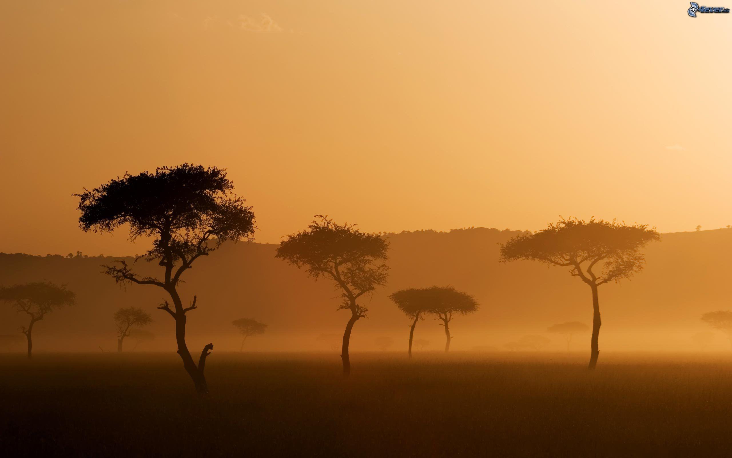 zonas climaticas del mundo Sabana,-arboles,-niebla-baja-152933